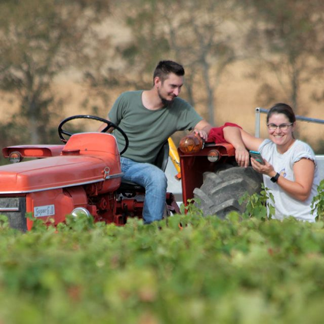 Vendanges 2018, vers un excellent millésime